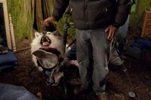 wolfpuppet